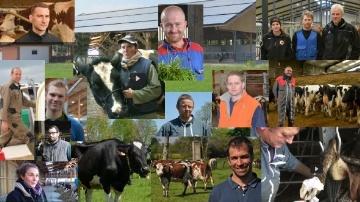 Reportages sur les vaches