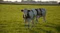 Exportations des animaux vivants et importations de viandes en hausse