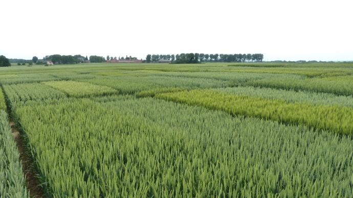 Essais de variétés de blé