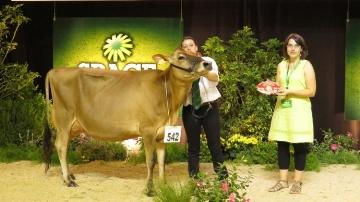 Hosiris, première de la section première lactation en race jersiaise.