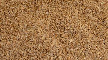 Les prix d�acompte du bl� inf�rieurs de plus de 50� � ceux de 2012