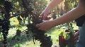 Mat�riels viticoles