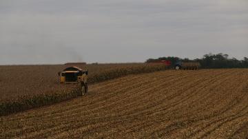 Une production record de ma�s et de pommes de terre