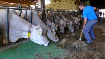 Les Pfister vendent 470.000 litres de lait en direct
