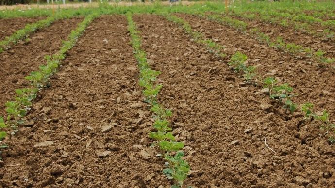 Inqui�tudes sur la production de soja au Br�sil