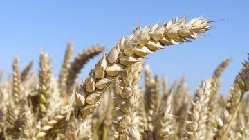 De bonnes conditions m�t�o p�sent sur les prix agricoles
