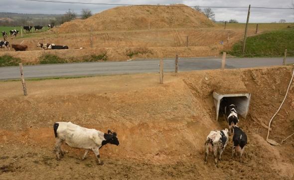 Boviduc vaches laitières