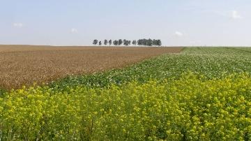 Le mauvais temps fait bondir les prix agricoles