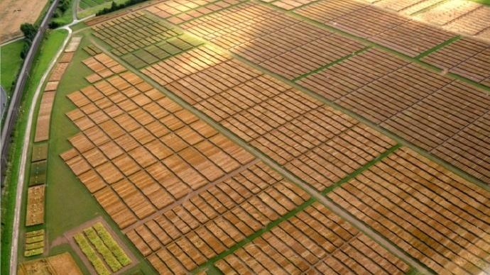 Sélection de variétés de céréales.
