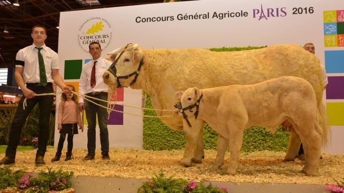 Delphine (Black Out x Touraine) au Gaec Richard. Une vache avec un dévellopement exceptionnel, très large aux hanches et particulièrement fine de peau.