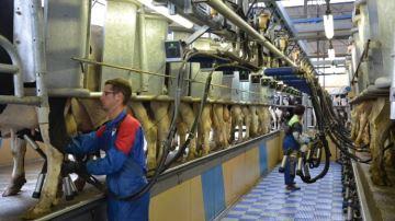 ��Des contrats laitiers cessibles pour sortir enfin de la logique des quotas�! �