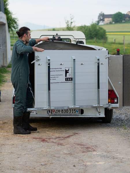 L'éleveur dispose d'une merorque particulière pour déplacer le corps jusqu'à l'abattoir où il sera découpé.