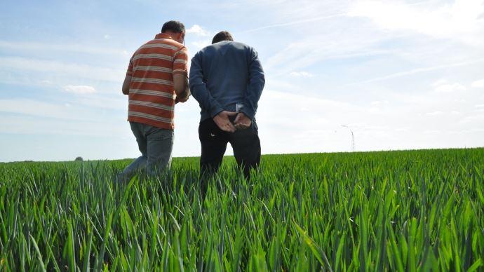 30% des agriculteurs déclarent 354 euros de revenus mensuels