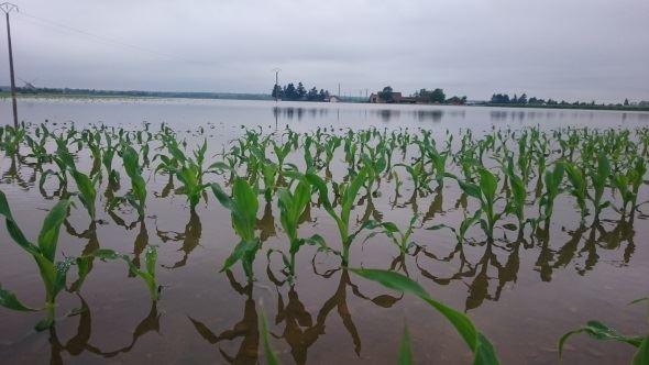 Ces dix hectares de maïs de la ferme de la Vallée, l'exploitation de Fabrice Roger, seront perdus.