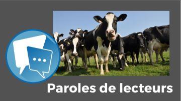 Vives réactions à propos de la tribune sur la productivité laitière