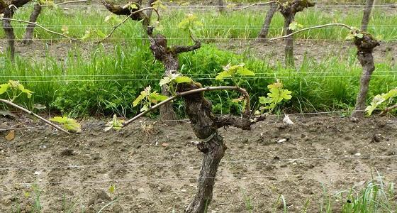 Viticulture oenologie viticulture les conseils pour for Chambre agriculture gironde