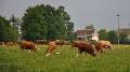 D�bat autour de l�antibior�sistance - Pour le Gie Zone Verte, le � produisons autrement � devrait �tre mis en pratique