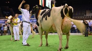 Concours vaches laitières