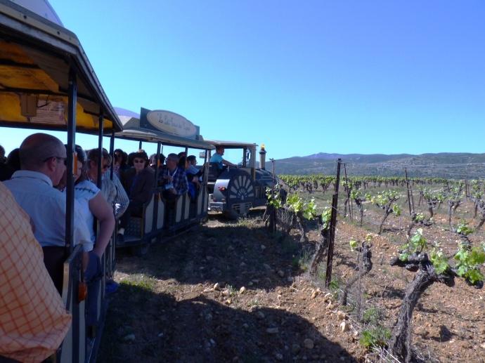 Le train sillonne les parcelles de vigne
