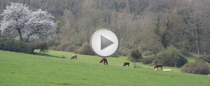 Essai Terre à Terre 2011 – Optimisation d'intrants Amazone/ Aurélien Chainé « Un retour sur investissement palpable »