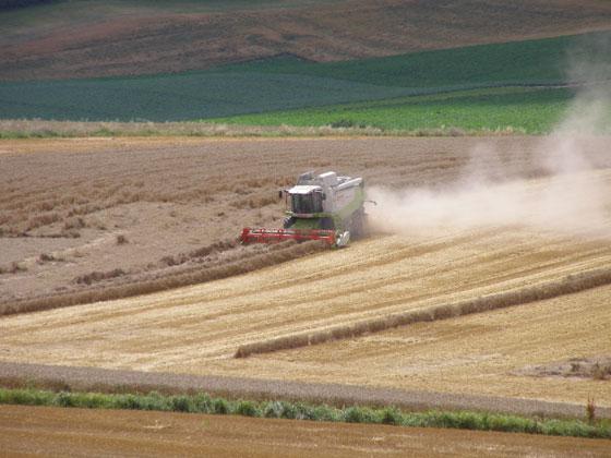 La moisson 2012 augmente le revenu des céréaliers