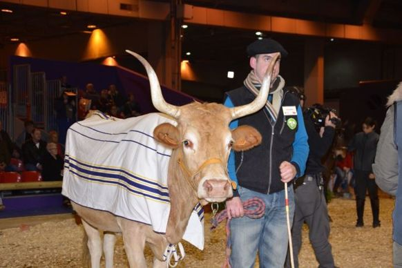 Vache Béarnaise