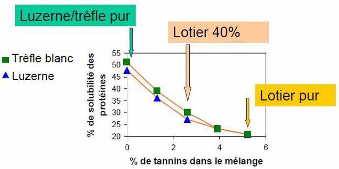 Tannins lotier