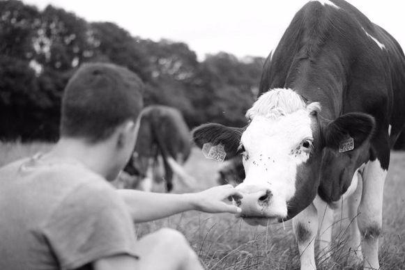 Les vaches, une vraie passion «Chaque amour commence par l'apprivoisement de l'autre. Moi, je les aime toutes sans exception.»