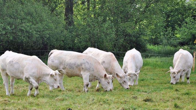 Les tiques sont particulièrement présentes dans les pâtures entourées de haies ou de boisements. Elle sont vecteurs de pathologies pour les bovins mais aussi pour l'éleveur comme la maladie de Lyme.