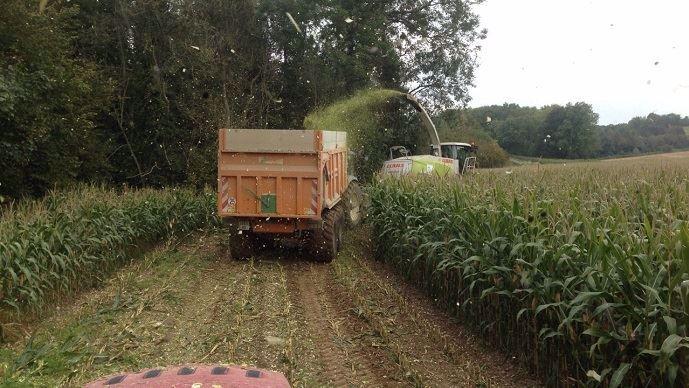 Chantier d'ensilage de maïs