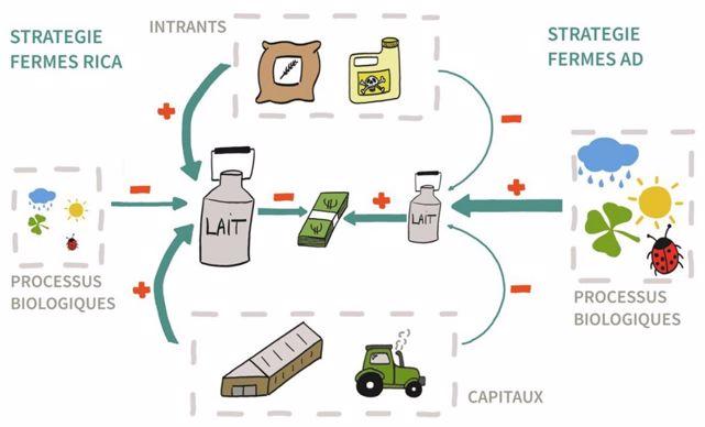 Les stratégies de production des fermes laitières