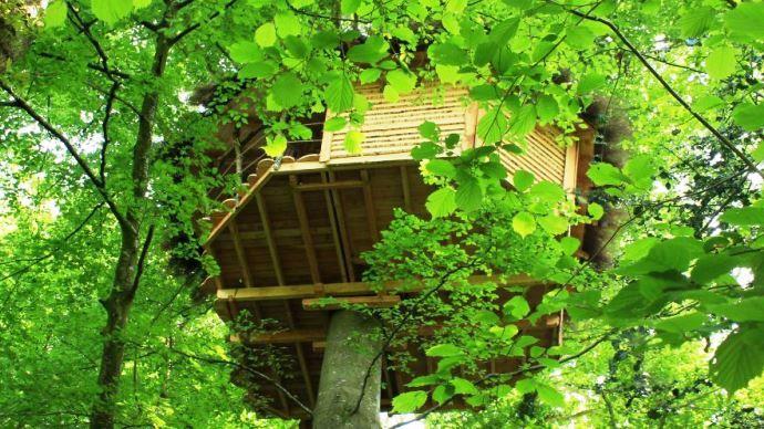 L'une des 2 cabanes installées dans les arbres sur l'exploitation d'Aurélie et Rodolphe Cauchard.