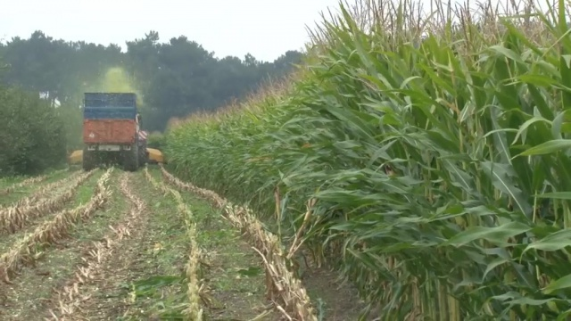 Laurent Gougeon : « Choisir une variété de maïs adaptée à son type de ration »