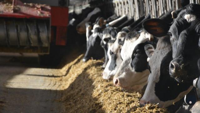 Trois stratégies alimentaires pour s'adapter aux marchés