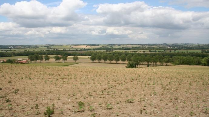 Agroforesterie : des obstacles juridiques à son développement