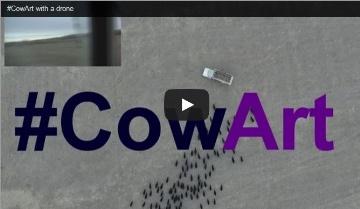 Cow art vu du ciel ou une autre utilisation du drone par un éleveur