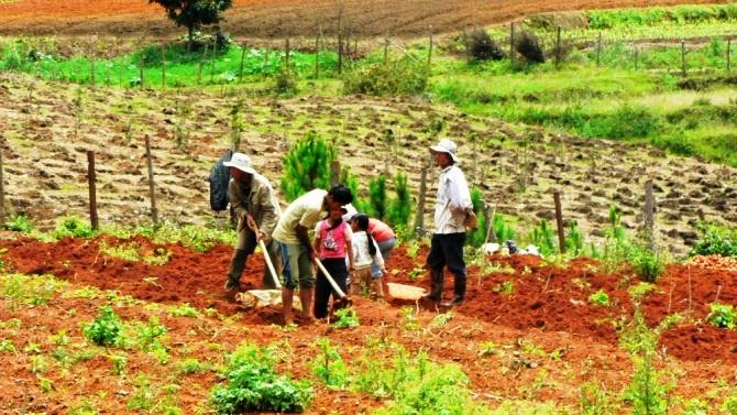 La surface moyenne des exploitations agricoles n'excède pas quelques ares.