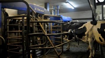 Y voir clair sur l'éclairage des bâtiments d'élevage