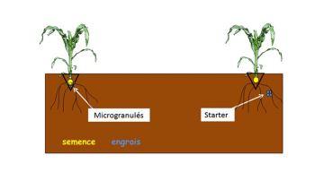 Les formes d'engrais starter microgranulés au banc d'essai