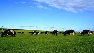Comment la Chine manipule le cours mondial du lait