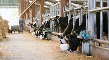 Elitest ouvre sa station de donneuses aux éleveurs en prestation de service