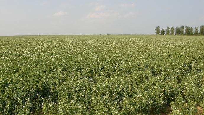 Le programme prévoit notamment de «soutenir les projets agricoles et industriels de R&D pour constituer une offre de protéines fonctionnelles de qualité et d'origine variée».
