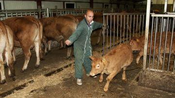 Le pari réussi du veau de lait sous lamère au Gaec Velles