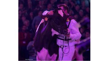Palmarès du concours Holstein (avec album photos)