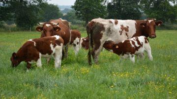 «La moitié des bovins sont carencés en iode et ensélénium»