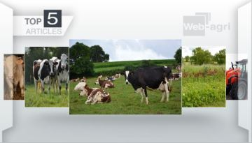 Vos cinq articles préférés sur l'élevage cette semaine