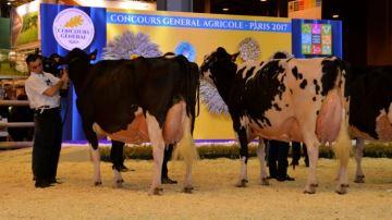 Les palmarès et vidéos de vos concours bovins préférés
