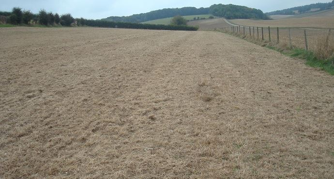 Parcelle desherbée totalement et prête à être semée en semis direct