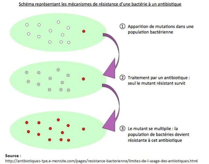Schéma représentant les mécanismes de résistance d'une bactére à un antibiotique
