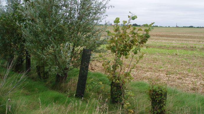 La Commission européenne entend interdire l'usage des produits phytosanitaires sur les surfaces d'intérêt écologique, notamment sur les SIE productives utilisées pour la production de protéines.